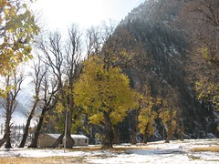 Beautiful Fall colors (worldofmusica) Tags: kashmir jammukashmir sonmarg kashmirindia kashmirtourism sonmargkashmir kashmirsightseeing kashmirtouristspots