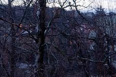 Kia / The Rain (Vjekoslav1) Tags: tree rain garden town vrt zagreb grad kia drvo nikonflickraward