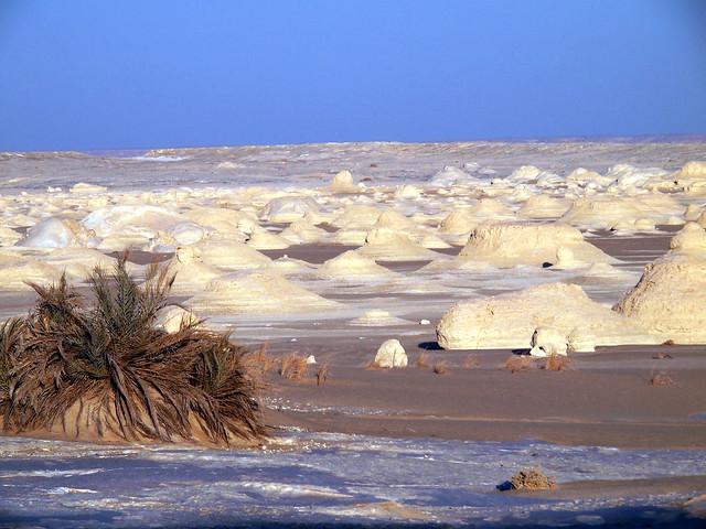 <p>白砂漠の愛らしい風景。 </p>