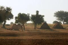 India // Rajasthan 2012-11-12