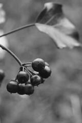 DSC_0717 (dan-morris) Tags: wood sunset white black tree green wet field grass forest photo leaf moss spring nikon shoot berries bokeh bark dew 1855mm dslr depth vr damp f3556g 1855mmf3556gvr d3100