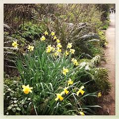 "#home from #school #garden #spring #sidewalk #neighbors #neighborhood • <a style=""font-size:0.8em;"" href=""https://www.flickr.com/photos/61640076@N04/8596274332/"" target=""_blank"">View on Flickr</a>"