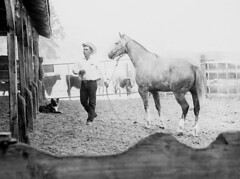 Cowboy at Albertson Ranch (ConejoThruTheLens) Tags: horses dogs cattle dappled thousandoaks geralddavis conejothroughthelens albertsonranch