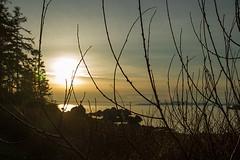 Rosario Sunset (chrissymay) Tags: ocean trees sunset sea plants beach washington seaside rocks cove evergreen rosario pugetsound washingtonstate deceptionpass rosariobeach deceptionpassstatepark waterislands