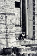 Black Cat. (Dikke Biggie.) Tags: blackandwhite bw white black canon blackcat kat feline zwartwit tamron zwart wit zwartekat 1750mm canoneos450d canonnl katachtig dgawc 113picturesin2013 50feline