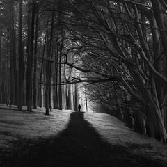 Brian's Day (nlwirth) Tags: trees light yup brianday nlwirth