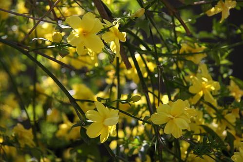 Bright spring