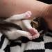 Mia's Kittens 30