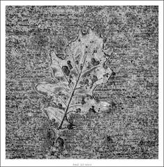 footprint...? (Strange Artifact) Tags: bw white black nature digital print concrete 4 olympus lightroom ep1 1442 13556 mzuiko