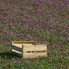 La cagette oubliée * (Titole) Tags: field purple violet squareformat crate cagette véroniquepetitchêne friendlychallenges titole brunellevulgaire nicolefaton