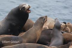 Seals (21 of 35)