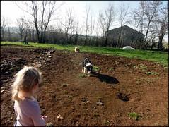 dh - louise et les chiens
