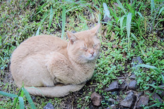 Today's Cat@2013-04-25 (masatsu) Tags: cat canon catspotting thebiggestgroupwithonlycats powershots95