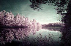 Peeking from the Shadows (McSnowHammer) Tags: trees sky lake water clouds forest reflections ir woods branch sweden infrared alingsås kvarnsjön
