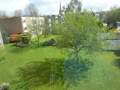 The tree in spring and its shadow (Julie70) Tags: shadow tree verde green london spring vert ombre printemps tavasz primavara zld rnyk photojuliekertesz2013
