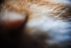 Cat (Matthew Trevithick Photography) Tags: ontario macro london cat fur nose blurry matthew archive kitty whiskers odd unposted onthisday trevithick randomo bufford matthewtrevithick mtphotography