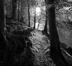 Danestone Country Park. Aberdeen (PeskyMesky) Tags: park blackandwhite canon scotland blackwhite country aberdeen riverdon bridgeofdon danestone canoneos500d danestonecountrypark
