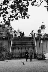(der_w) Tags: street people urban bw bird birds stairs river pigeon shift treppe vögel tilt fluss taube neckar vogel tse personen tübingen tiltshift badenwürttemberg schwarzweis tse90mm flus neckarinsel streetfotography