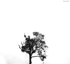 Alone through the infinity (Fazley Rabby) Tags: blackwhite monochrome epl6 olympus lightroom adobe photoshop