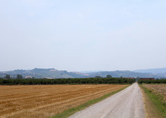 Grano (Lalalleba) Tags: field wheat hills horizon summer hot country road