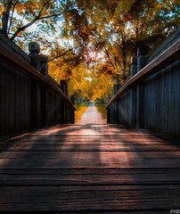 Autumn (patkelley3) Tags: sunset rays bridge path