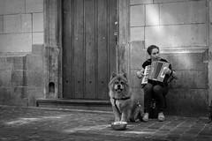 Brussels (iegienie) Tags: street brussel brussels bruxelles music dog