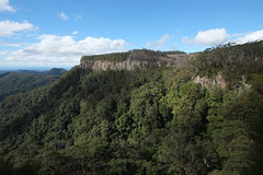 Springbrook plato (igomak) Tags: springbrooknationalpark rainforest bush twinfallscircuit