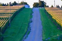 Corn Rows (John Dame) Tags: nebraska corn b1b farm countryroads cornrows church harvest