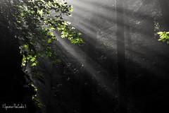 A hint of heaven (SpencerTheCookePhotography) Tags: poconos pennsylvania light shadow forest sunlight sunbeam spencerthecookephotography canon ultrawide hiking nature outdoors explore beautiful heaven bushkillfalls