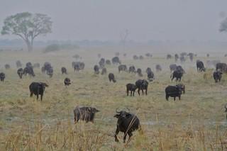 Namibia Dangerous Game Safari - Caprivi Strip 66