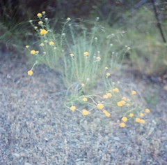 Mishe Mokwa (Laura-Lynn Petrick) Tags: series santamonica california hiking lauralynnpetrick hikingmishemokwa californiamountains mediumformat californiamountainslauralynnpetrick lauralynnpetricklandscapes lauralynnpetrickcalifornia californiawildlife californiawilderness lauralynnpetrickcaliforniawilderness inthewild sunkissed nature wild natural naturistic