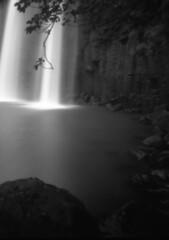 Whangarei Falls / Northland / NZ (Matthew McCutcheon) Tags: matthew matt mccutcheon quintin newzealand nz nzlomo lomography lomo landscape waterfall blackandwhite bw blackwhite bwf blackandwhitefilm film filmcamera filmscan familyimages filmimage movement monochrome mono fuji fujifilm acros 120mm rollfilm epson epsonv700 elements earthscape v700