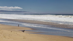 beach boys (cherryspicks (intermittently on/off)) Tags: beach coast sand gull bird ocean pacific waves shore seaside water outdoor seascape clouds
