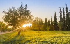 Sunset Colours (Sr.Ivan) Tags: sunset atardecer sun colours arboles tree cesped grass alicante alacant costablanca elche elx otoo autumn canon g7x markii landscape beautiful light sky garden