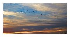 Siluetas al atardecer (Lourdes S.C.) Tags: cielo nubes atardecer siluetas flamencos nwn