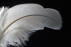 366 - Image 256 - Feather macro... **Explored** (Gary Neville) Tags: 365 365images 366 366images photoaday 2016 sonycybershotrx100 sony sonycybershotrx100iii rx100 mk3 raynox macro garyneville rx100iii