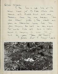 n8_w1150 (BioDivLibrary) Tags: 19191982 australia browngrahama browngrahama19191982 diaries ornithologists travel museumvictoria bhl:page=48072261 dc:identifier=httpbiodiversitylibraryorgpage48072261 grahambrown fielddiary geo:country=australia taxonomy:genus=cygnus taxonomy:common=swan redcappeddotterel silvergull