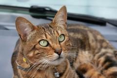 Curiosity (katjacarmel) Tags: eyes stripes cute