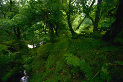 Goblin HQ (Costigano) Tags: moss nature forest woods woodland green