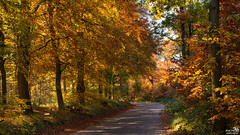 Autumn is coming, one from the archive (BraCom (Bram)) Tags: bracom autumn fall herfst tree boom leaf blad path pad sunny zonnig forest bos trees bomen leaves bladeren nature natuur stam trunk bergenopzoom noordbrabant nederland netherlands holland canoneos5dmkiii widescreen canon 169 canonef24105mm bramvanbroekhoven nl