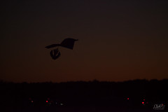 Night Kite (PNG441) Tags: kite newyorkstate silhouette sunset sky adirondackballoonfestival night floydbennettmemorialairport outdoors queensburyny 2016 fall kites dusk