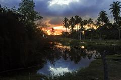 Os Reflexos da Minha Arte. (Adolfo Santos Sonteria) Tags: adolfosantossonteria arte atmosfera aoarlivre maracaipe rio escuro coqueiros