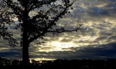 Laatste restjes avondlicht /Last bits of the evening light. (truus1949) Tags: wandelen bomen avondlicht wolken natuur