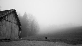 [EXPLORE] Daily Dog 2013 087: Eerie