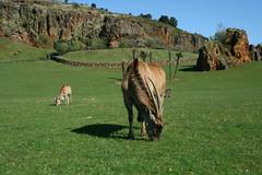 Cabarceno 2013 (Alberto Cabello Mayero) Tags: animales cantabria cabarceno parquenatural