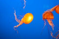 IMGP3215.jpg (MEATY IDEAS) Tags: fish night vancouver aquarium december pentax around vancouveraquarium k7 2011 pentaxk7
