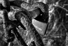 Rusted Lock (daneverest) Tags: sunset blackandwhite outdoors spring rust lock wildlife padlock essex hdr greyscale wallasea wallaseaisland