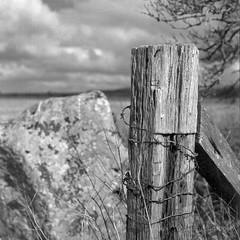 Barbed sarsen (The Old Penfold) Tags: blackandwhite bw 120 6x6 film fence mediumformat square bronica squareformat analogue wiltshire avebury hff sarsen iso80 sqai 80mmf28 exactollux zenzanonps80mm rolleiretro80s fencedfriday