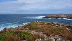 Cape du Couedic - 'Life on the Edge' (rogersmithpix) Tags: kangarooisland capeducouedic furseals flinderschasenationalpark