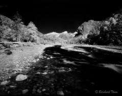 Rissbach seen on Infrared film (Bernhard_Thum) Tags: blackandwhite alps film nature analog landscape analogue 6x7 alpen schwarzweiss bernhard tistheseason karwendel mamiya7 irfilm thum rockpaper rissbach infrarotfilm landscapesdreams daarklands sekor465 rolleiinfrared820 bernhardthum